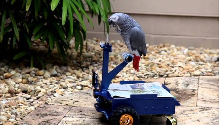 Tiny Driveable Cart For Birds