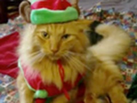 Funny Animals Wishing You Merry Christmas