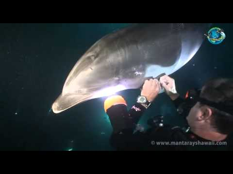 When A Dolphin Asked For Human Help