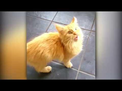 When Cats Go Crazy