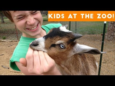 Funny Compilation Of Kids Visiting The Zoo
