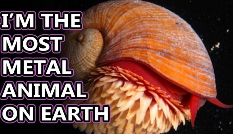 The Strange Magnetic Deep Sea Snails