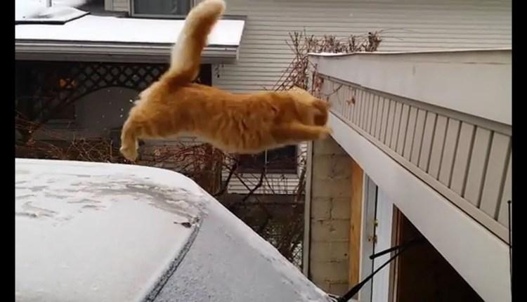 Craziest Jumping Cats Fails Compilation