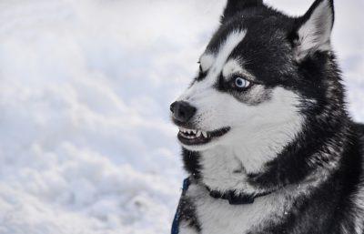 sbse khatrnak kutta, dogs in hindi