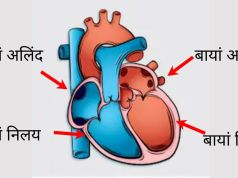 information about heart in hindi