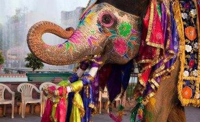 Elefant Indien-Jaipur verziert für Feier