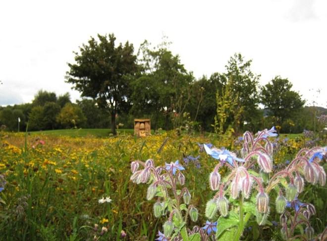 In der Nähe des Hotels: Golfplatz zwischen Wildkräutern und Bienenhotel