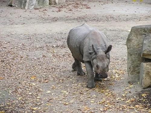 Zoo Tiergarten
