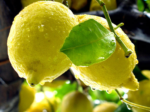 limonidella costiera amalfitana
