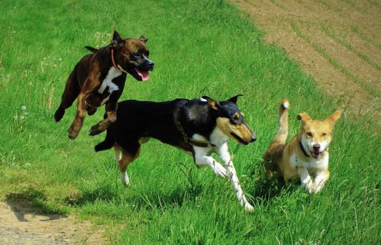 Foto dreier springender Hunde