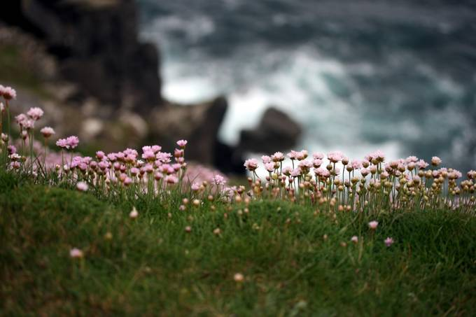 tiny flowers by pamramseycorey - Celebrating Nature Photo Contest Vol 5