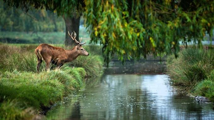 Somewhere on the river by MaRock - Celebrating Nature Photo Contest Vol 5