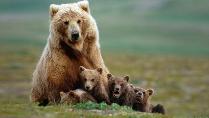 Bear Family by elangwidodo - The Wonders of the World Photo Contest