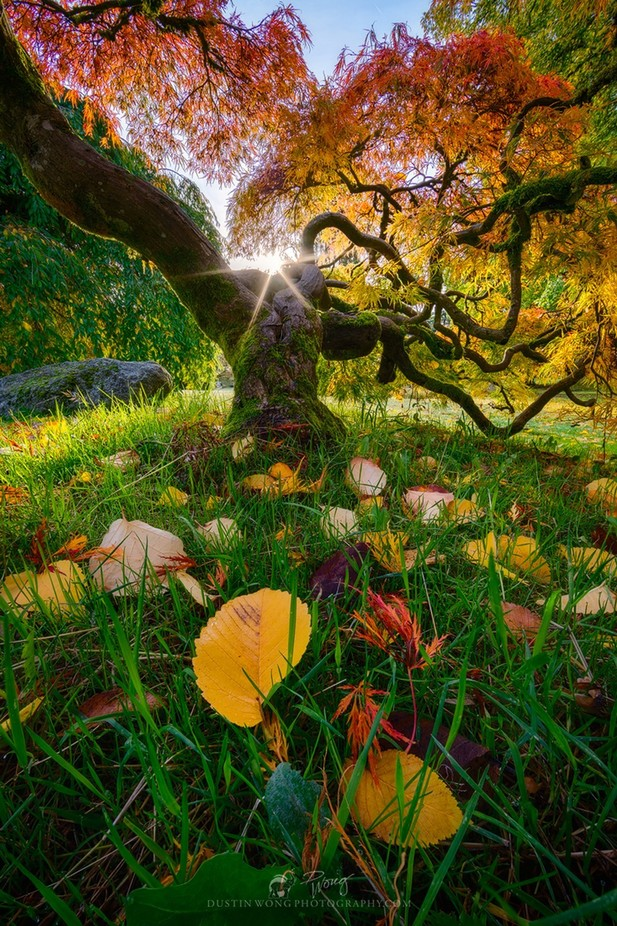 Morning Triumph by DWongPhotos - The Wonders of the World Photo Contest