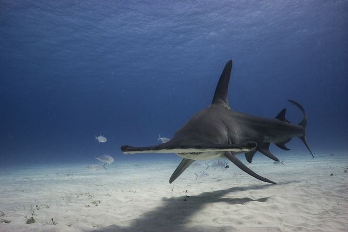 Hammerhead On by MattWFrost - The Wonders of the World Photo Contest