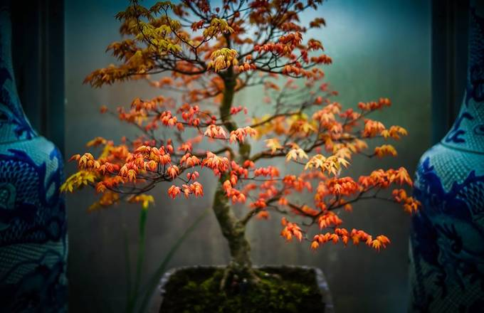 TINY TREES by carl_doghouse - Orange Tones Photo Contest