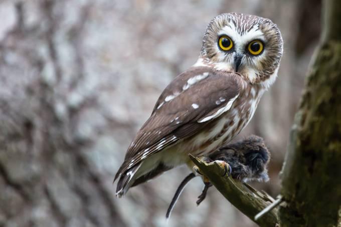 1410_Brent Cooke_001-2 by Hogzilla357 - Celebrating Nature Photo Contest Vol 5