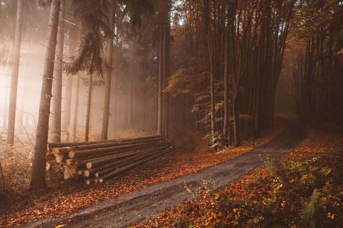 Lonely logs in the orange autumn woods by Hud1ai2 - Orange Tones Photo Contest