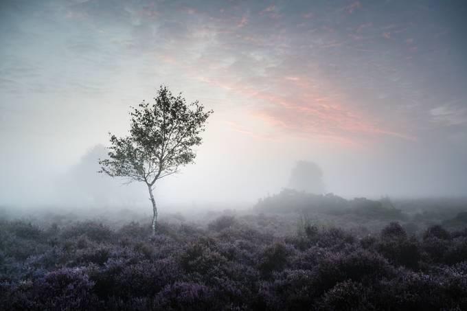 Westleton Heath 27 August 2017 by mushroomgodmat
