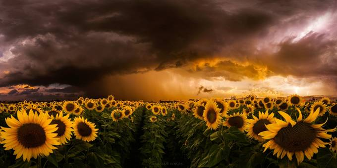 Independence Day by adrian-borda - Celebrating Nature Photo Contest Vol 5
