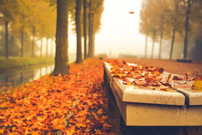 Autumn in the park by reginebaeker - Orange Tones Photo Contest