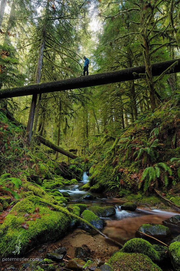 Als er een boom in het bos valt door peternestler - Unique Locations Photo Contest