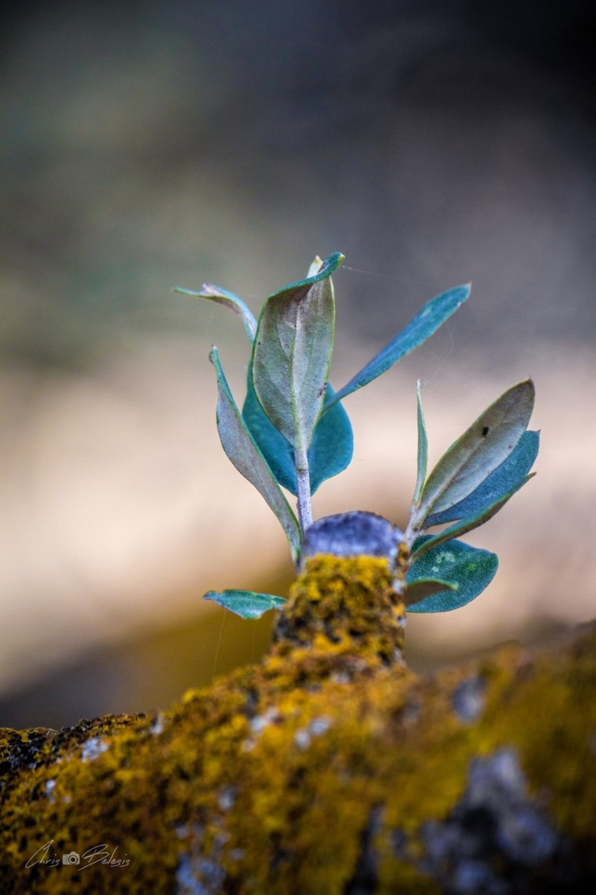 Olive leaves by chrisbelesis - The Wonders of the World Photo Contest