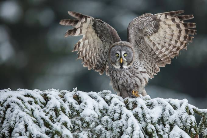 I'm thiiiis big... by vladcech - Celebrating Nature Photo Contest Vol 5