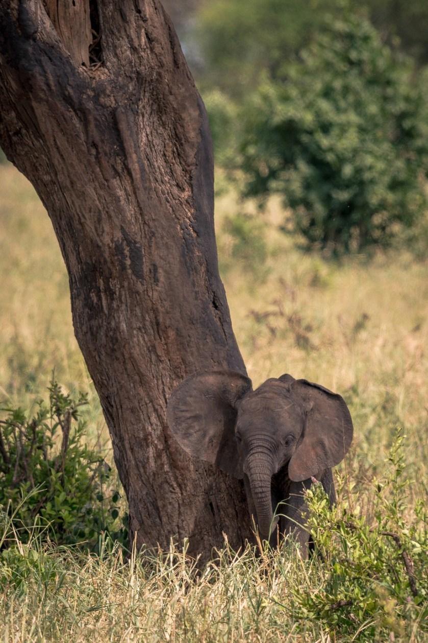 Tiny by paulwild - Celebrating Nature Photo Contest Vol 5
