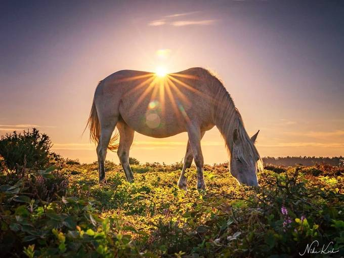 Sun Rays on Horseback by framing-places - Image Of The Month Photo Contest Vol 37