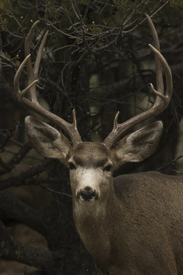 Buck by ericakinsella - Image Of The Month Photo Contest Vol 37