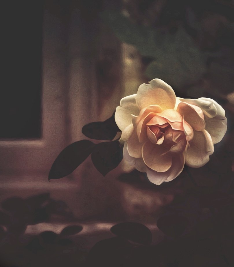 Serene petals by BexitaSky - Image Of The Month Photo Contest Vol 37