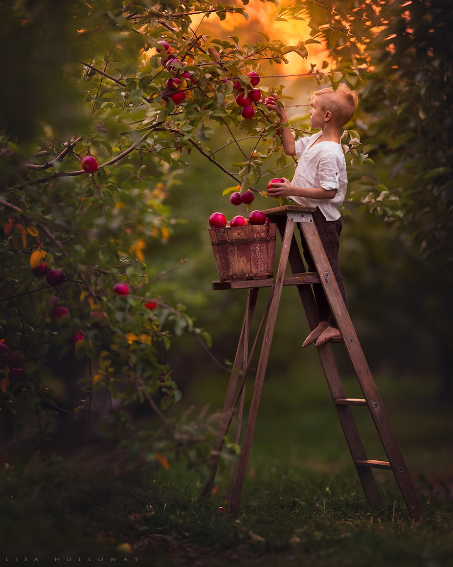 Harvest by lisaholloway - Monthly Pro Photo Contest Vol 45
