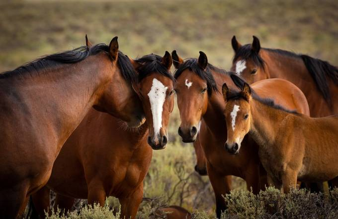 Horse Talk  by johnboland - Covers Photo Contest Vol 51