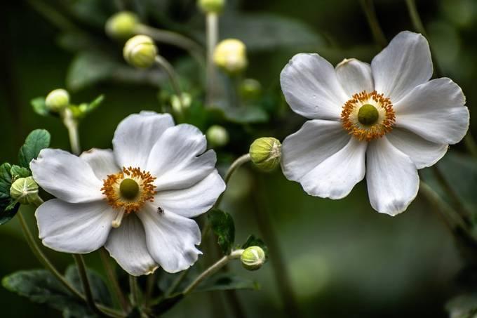 Flowers by Sandra-365 - Shallow Depth Photo Contest