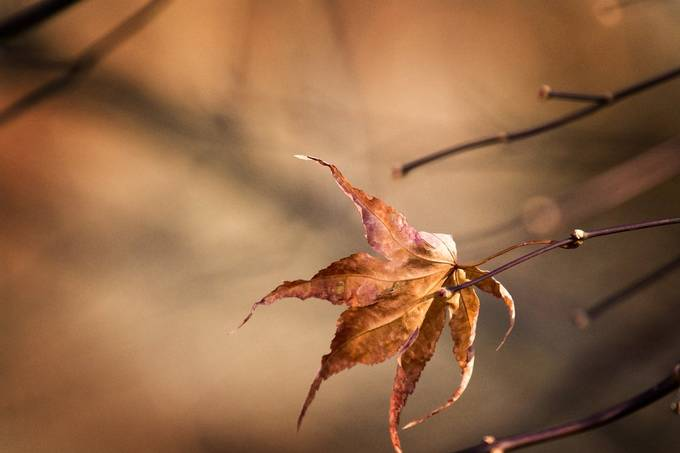 754A1301_8538s by susanedmundsonvoland - Shallow Depth Photo Contest