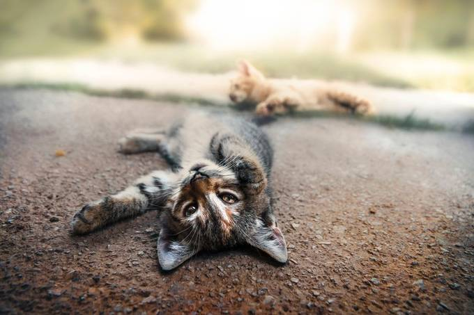 Two kittens play by miskovic - Shallow Depth Photo Contest
