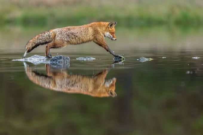 Jump by vladcech - My Best New Shot Photo Contest