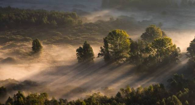 Trees in the morning mist by pietroebner - My Best New Shot Photo Contest