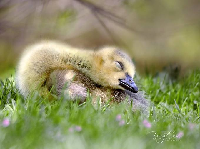 Sleepies by terryc - My Best New Shot Photo Contest