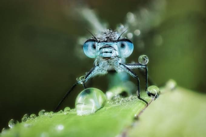 Pearls by Naturlicht - Shallow Depth Photo Contest