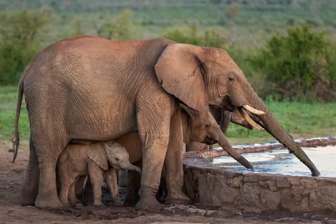 Baby Elephant by njarehart - My Best New Shot Photo Contest