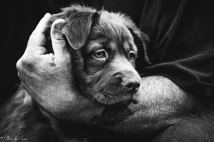 Puppy Love by Jeta1websandpix - My Best New Shot Photo Contest