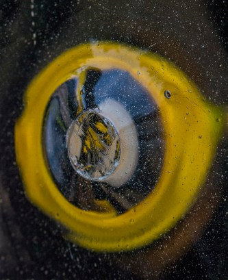 Glass-distorted daffodil