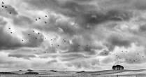 Chris Maidens - Crows Landing (Landscape - Print, SOM)
