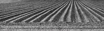 Jillian Koernich_Ploughed stripes