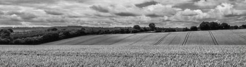 Jillian Koernich_Wheat fields