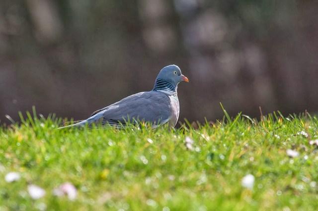 Wood Pigeon Lodge Lake, Milton Keynes