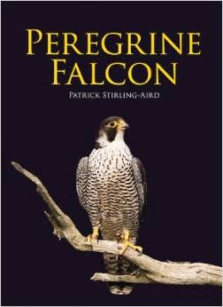Peregrine Falcon by Patrick Stirling-Aird - Reviewed