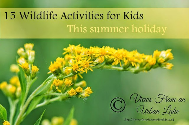 15 Top Summer Holiday Wildlife Ideas for Kids